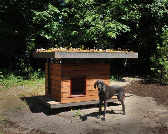 An eco doghouse made from recycled building materials for Modern dog house designs